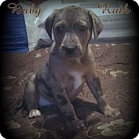 Adopt A Pet :: Baby Ruth - Denver, NC