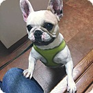 Adopt A Pet :: Darla Bri