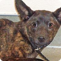 Adopt A Pet :: Nora - Wildomar, CA