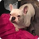 Adopt A Pet :: Marley Rose