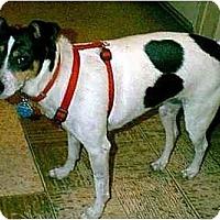 Adopt A Pet :: SOUTHERN BELLE - dewey, AZ