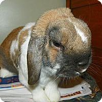 Adopt A Pet :: Crisper - North Gower, ON