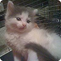 Adopt A Pet :: *Data - Winder, GA