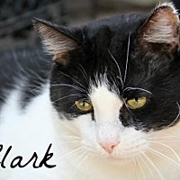 Adopt A Pet :: Clark - Centerton, AR