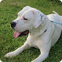 Adopt A Pet :: Rosie - Stroudsburg, PA
