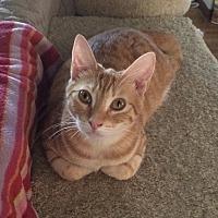 Adopt A Pet :: Grace - San Ysidro, CA