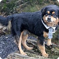 Adopt A Pet :: Romeo - Dalton, GA