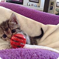 Adopt A Pet :: LOLLYPOP - Palm Desert, CA