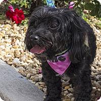 Adopt A Pet :: Casey - Warner Robins, GA