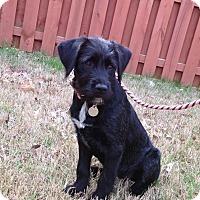 Adopt A Pet :: Bernadette - Knoxville, TN