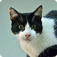 Adopt A Pet :: 10310259 - Brooksville, FL