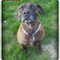 Adopt A Pet :: Buckeye - Blacklick, OH