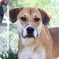 Adopt A Pet :: Cy - Greensboro, NC