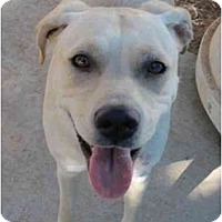 Adopt A Pet :: Jewel - Las Cruces, NM