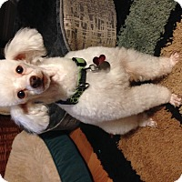 Adopt A Pet :: Arthur - Homewood, AL