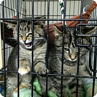Adopt A Pet :: Mojo - Byron Center, MI
