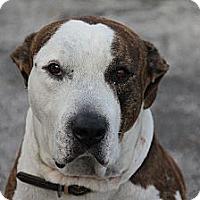 Adopt A Pet :: George - Fort Lauderdale, FL