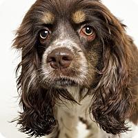 Adopt A Pet :: Coco - Baton Rouge, LA