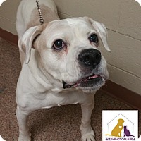 Adopt A Pet :: Xena - Eighty Four, PA