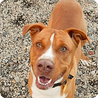 Adopt A Pet :: Tucker - Long Beach, NY