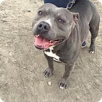 Adopt A Pet :: TUG - Gustine, CA