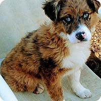 Adopt A Pet :: Thelma - Baltimore, MD