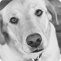Adopt A Pet :: Bo - San Francisco, CA