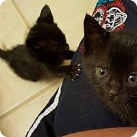 Adopt A Pet :: Penny - ROSENBERG, TX