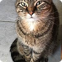 Adopt A Pet :: Cocoa - Covington, KY