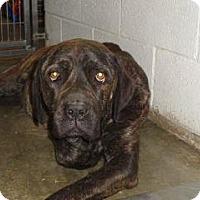 Adopt A Pet :: Melina - Wildomar, CA