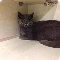 Adopt A Pet :: Marshall (at Petco) - Baltimore, MD