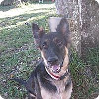 Adopt A Pet :: Ziggy - Green Cove Springs, FL