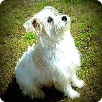 Adopt A Pet :: Micah - Gadsden, AL