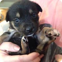 Adopt A Pet :: Birdie, Runt - VIDEO - Houston, TX