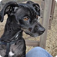 Adopt A Pet :: Ren - Meridian, ID