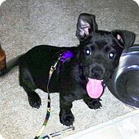 Adopt A Pet :: Gilligan - Metamora, IN