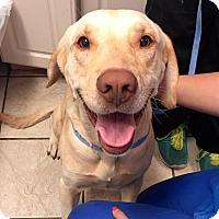 Adopt A Pet :: Anderson - Cumming, GA