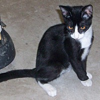 Adopt A Pet :: PETEY - Morriston, FL