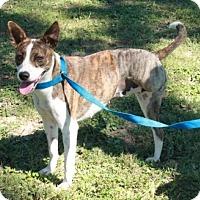 Adopt A Pet :: Penelope - Salem, NH