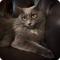 Adopt A Pet :: Vaughn - Savannah, GA