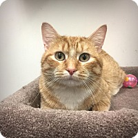 Adopt A Pet :: Archie - Roseville, MN