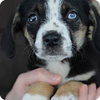 Adopt A Pet :: June - Danbury, CT