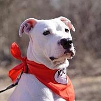Adopt A Pet :: Sawyer - Denton, TX