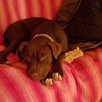 Adopt A Pet :: Fancy Pants - Carlisle, PA