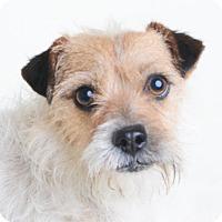 Adopt A Pet :: Dodger - Wilmington, DE