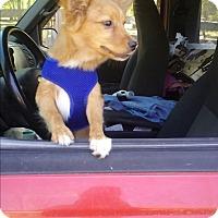 Adopt A Pet :: Romeo - Crawfordville, FL