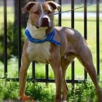 Adopt A Pet :: Jethro - Princeton, KY