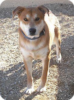Cattle Dog Mix Dog for adoption in Wickenburg, Arizona - Kirby