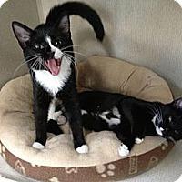 Adopt A Pet :: KATIE & ROSIE - 2013 - Hamilton, NJ