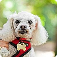 Adopt A Pet :: Peggy Sue - Sherman Oaks, CA